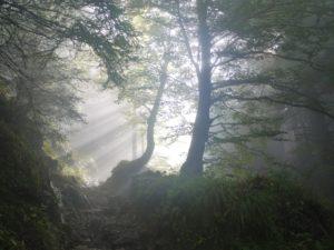 bosque covas viveiro